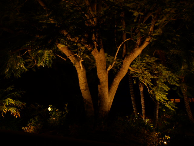 Dos Vientos Landscape Lighting